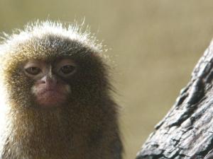 tiny library monkey