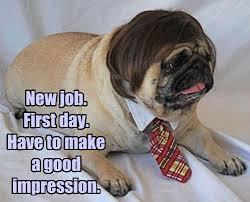 new job 1