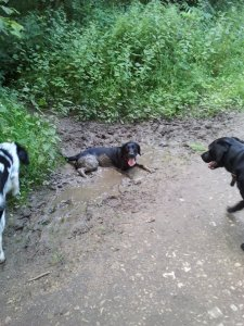 Betty, Badger and Murphy