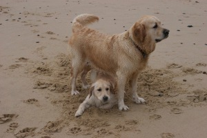 Traffy and Bella in Norfolk