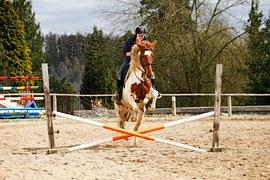 horse-1169871__180