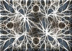 neurons-582054__180