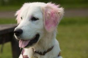 pink ears Freya
