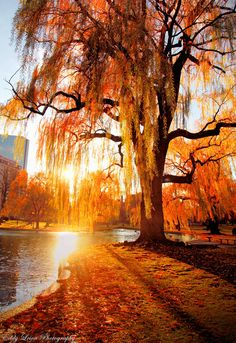 autumnal-trees-by-river