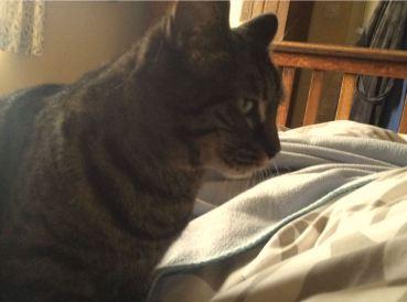 Jo Franklin's cat Louie